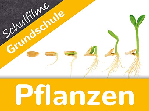 Schulfilme Grundschule: Pflanzen