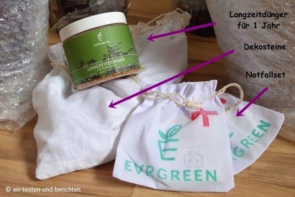Die pflegeleichten Zimmerpflanzen von Evrgreen 53