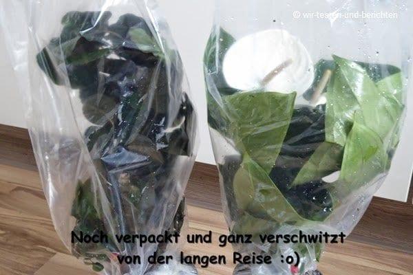 Die pflegeleichten Zimmerpflanzen von Evrgreen 52