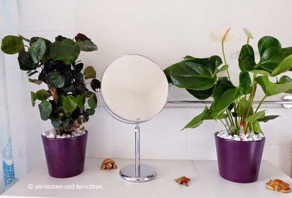 Die pflegeleichten Zimmerpflanzen von Evrgreen 56