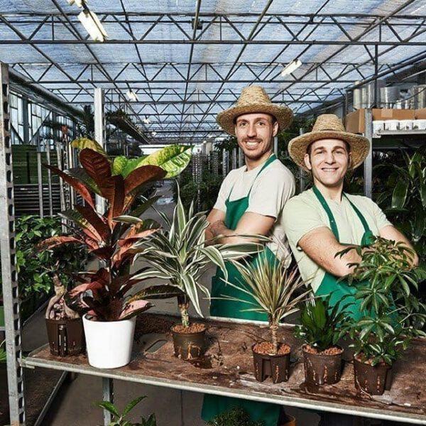 Die pflegeleichten Zimmerpflanzen von Evrgreen 72