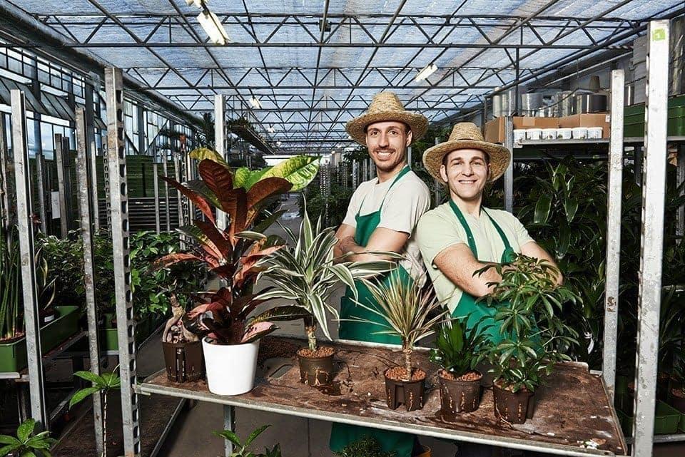 Die pflegeleichten Zimmerpflanzen von Evrgreen 51