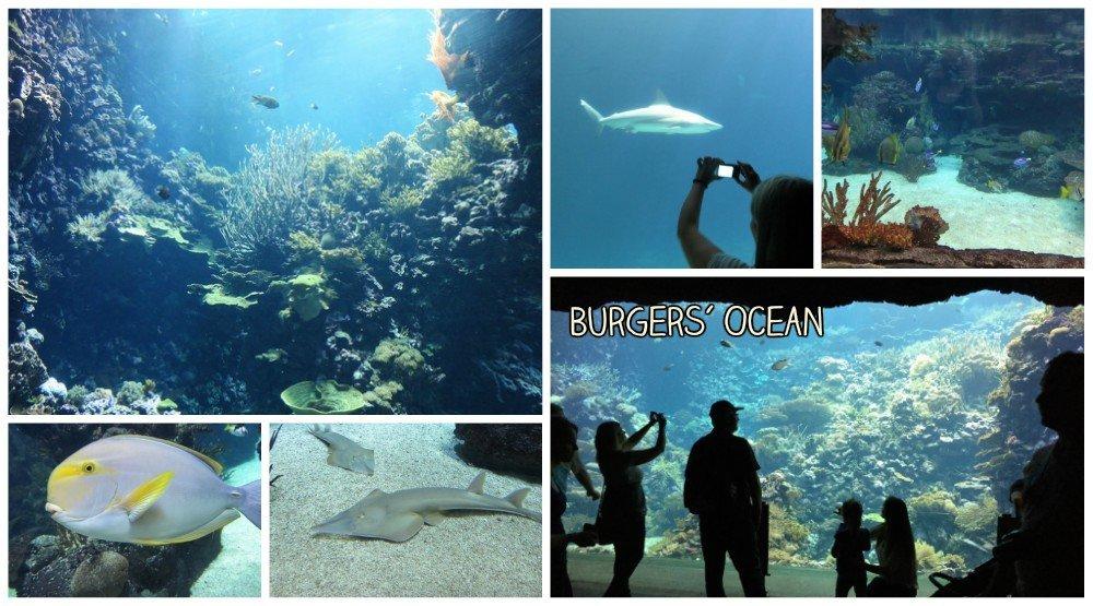 Burgers Zoo - Burgers Ocean