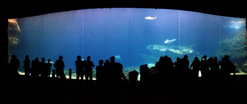 Salzwasserbeckenmit Haien Burgers Zoo