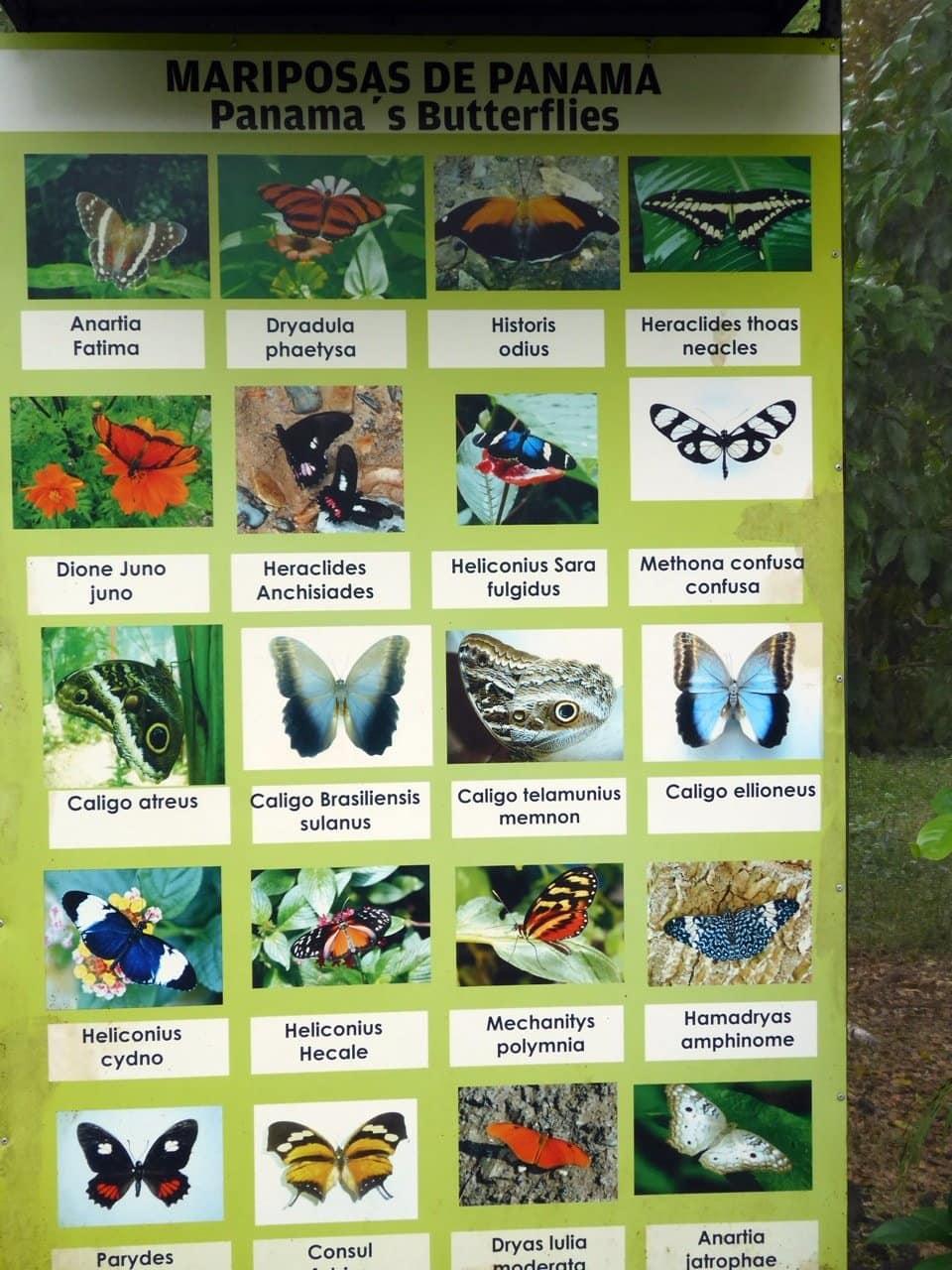Tipps Panama Ausflug Schmetterlingshaus