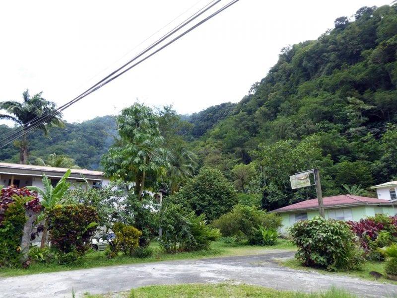 Abenteuer-Dominica-Dichter-Urwald