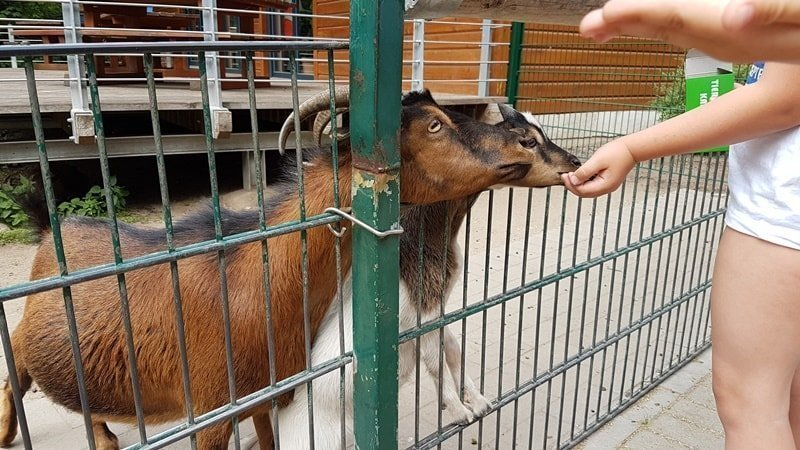 Tiere füttern im Kaisergarten Oberhausen
