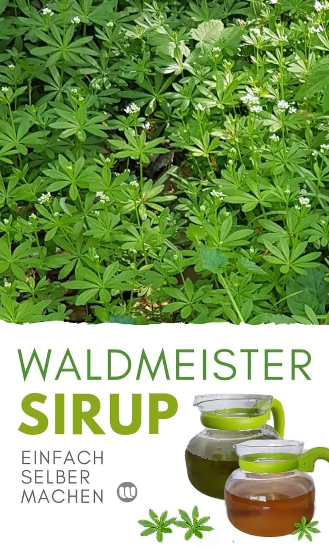 Waldmeister Rezept: Waldmeistersirup herstellen
